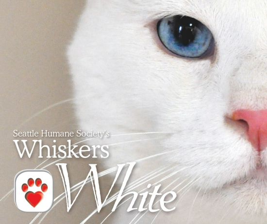 Wine Whiskers White 2011 FINAL2 864 550 500 80